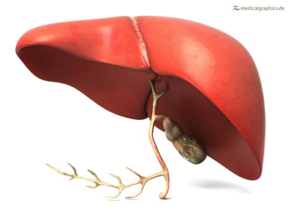 What is hepatitis A